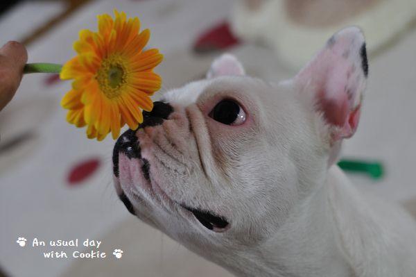 花とクッキー2_1475