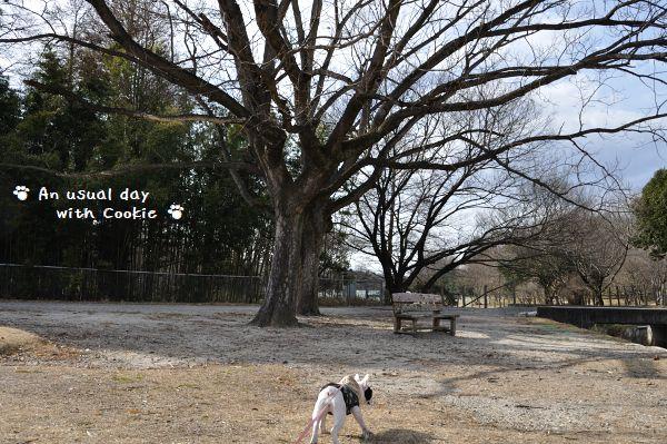 大きい木とクッキー_1489