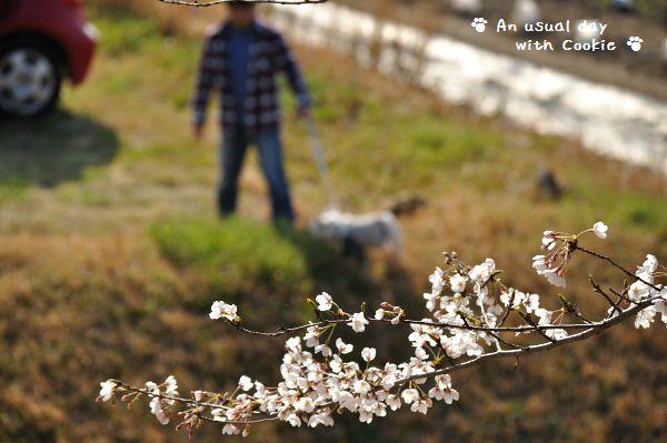 桜の向こう_272