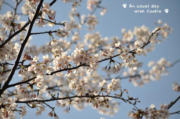 桜と空_273