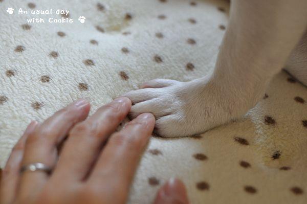 手と手_382