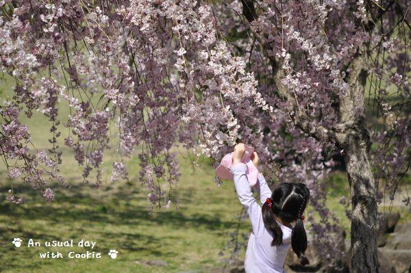 女の子と桜_494