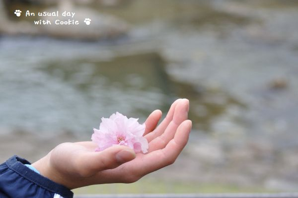 桜と手_840