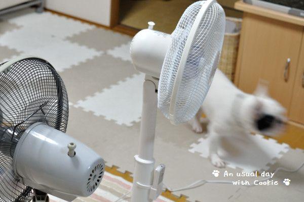 扇風機1_1408