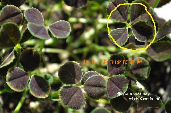 clover2_1141.jpg