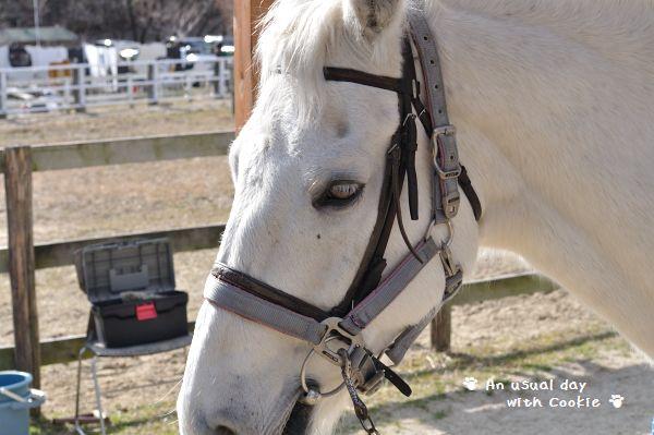 horse_1080.jpg