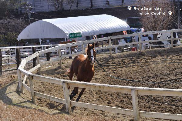 horse_run_1087.jpg