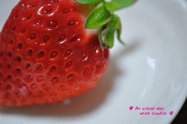 ichigo_1187_20120226113040.jpg