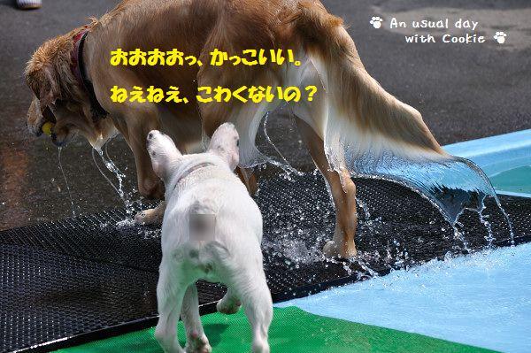 kowakunai.jpg