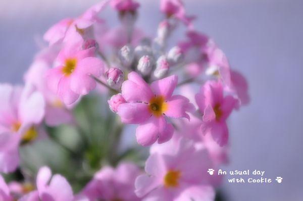 pink2_1148.jpg