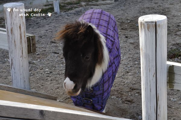 pony_1089.jpg