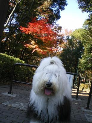 あられと念珠坂公園の紅葉