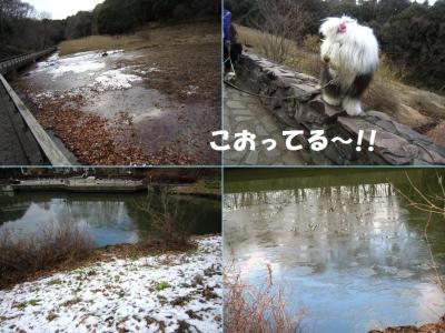 四季の森凍