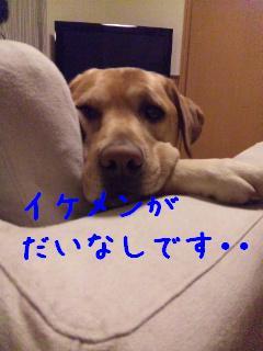 DVC00009_20110120135527.jpg