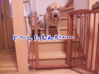 DVC00053_20110115095656.jpg