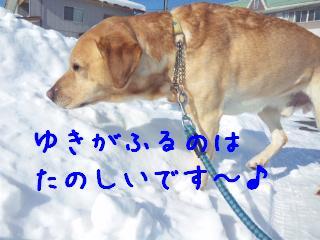 DVC00055_20110114143544.jpg