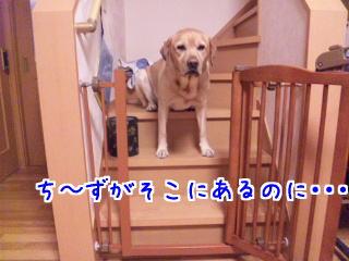 DVC00058_20110115095656.jpg