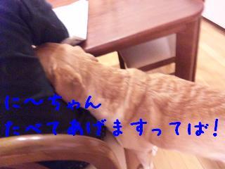 DVC00087_20110201105943.jpg