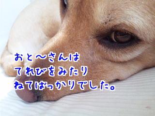DVC00098_20110206124355.jpg