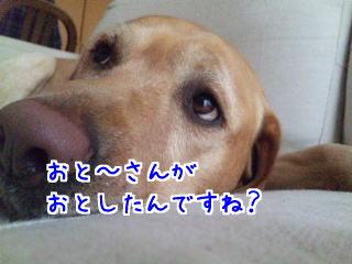 DVC00116_20110210075633.jpg