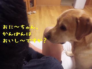 DVC00267_20110509131018.jpg