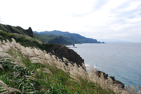神威岬ススキの海岸