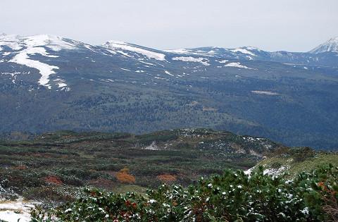 十勝岳の森林限界