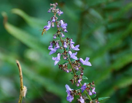 紫色の花3