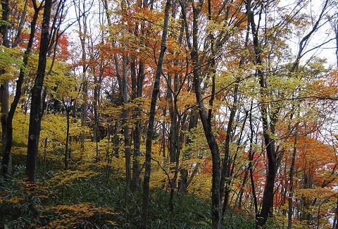 原生林の紅葉1