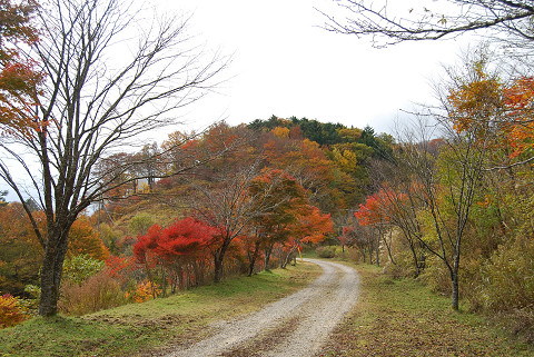 道沿いの紅葉