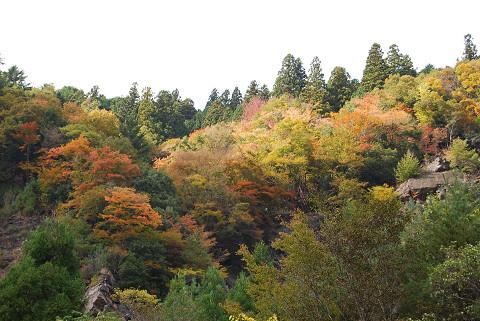渓流の紅葉2