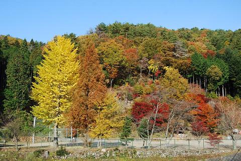 菅森小の学校林