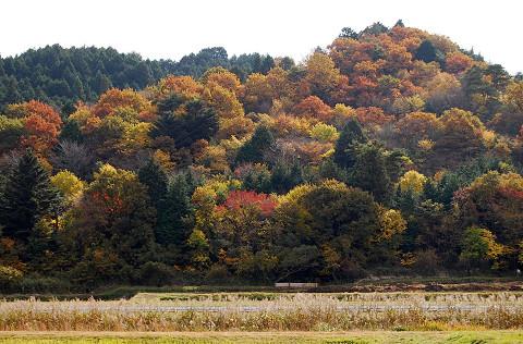 作手の秋の山(中河内)