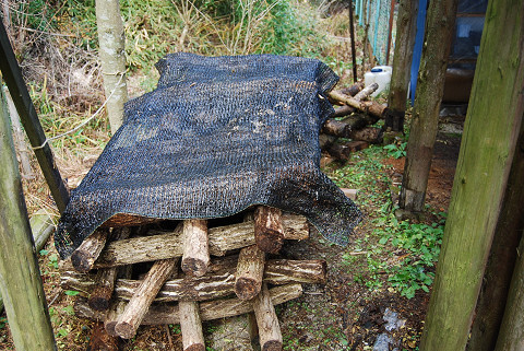 シイタケとナメコのホダ木
