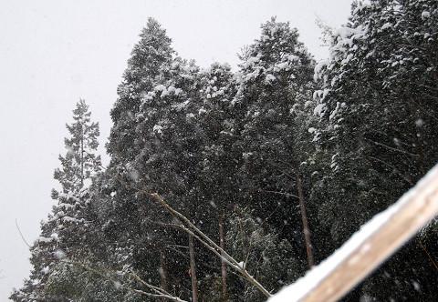 降り積もる雪2