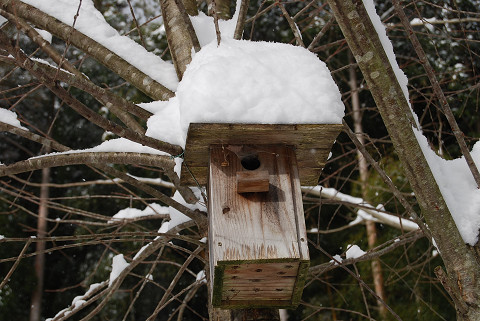 雪を頂く巣箱