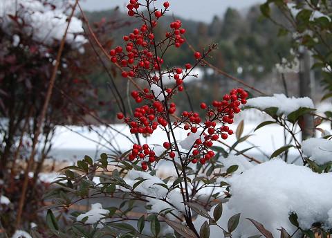 雪とナンテンの実