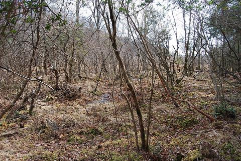 冬の長命湿地1