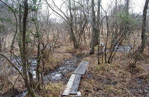 冬の長命湿地2