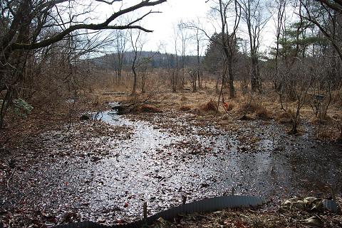 冬の長命湿地3