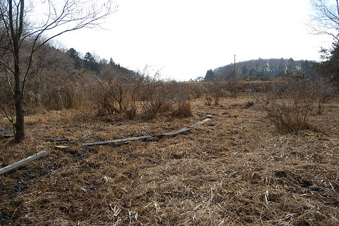 冬の長命湿地4