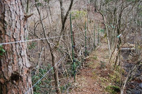長命湿地の電柵