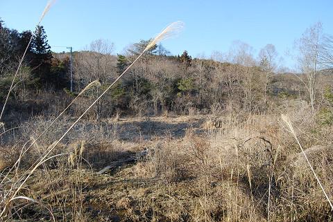 南から長命湿地