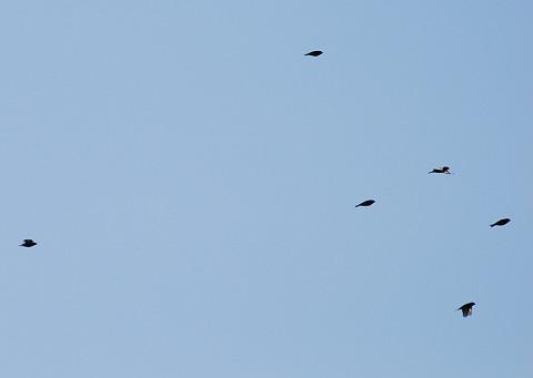 何の鳥?2