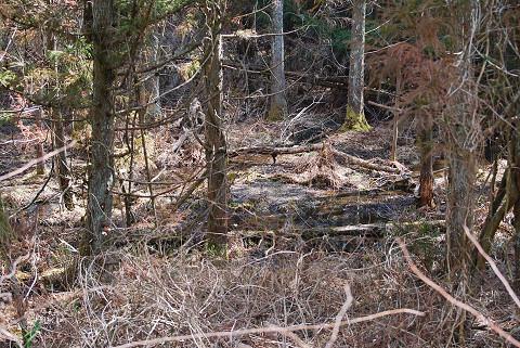 放棄された湿地