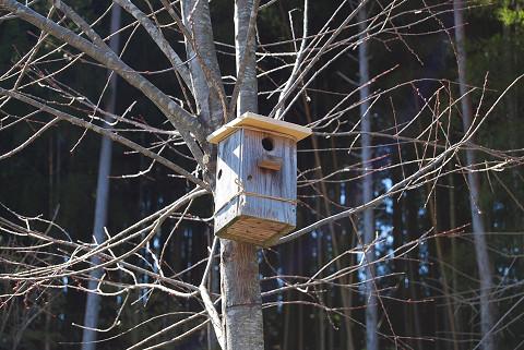 カツラの木の巣箱