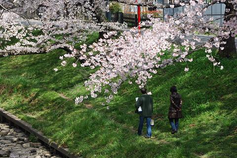 伊賀川の散策