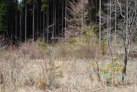 田之尻湿原の風景