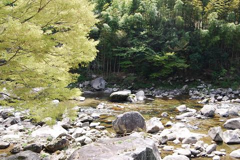 渓流とケヤキ