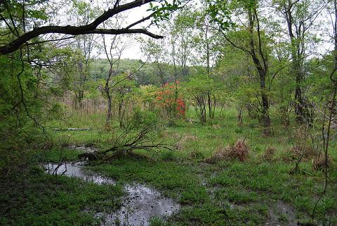 長命湿地の5月